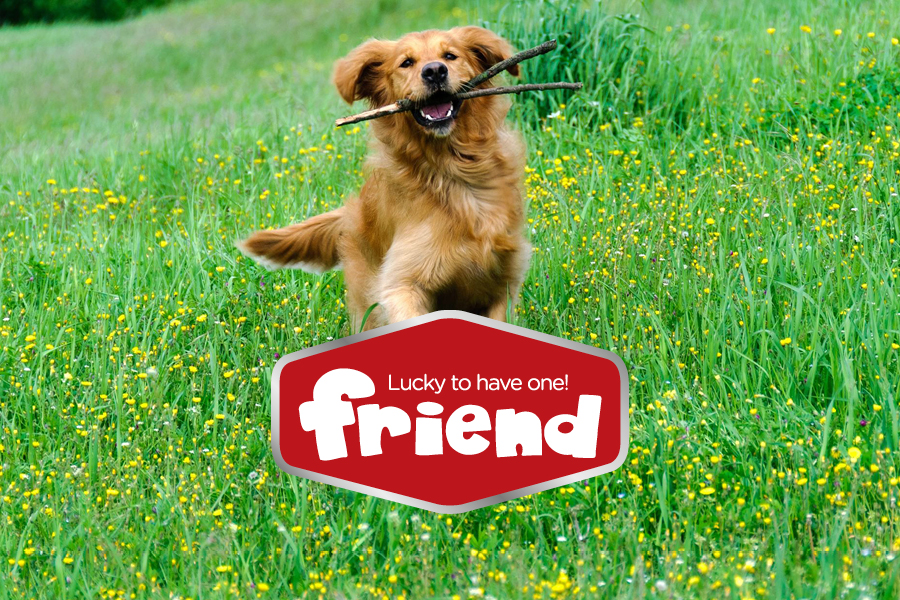vizualni identitet friend hrana za pse i mačke