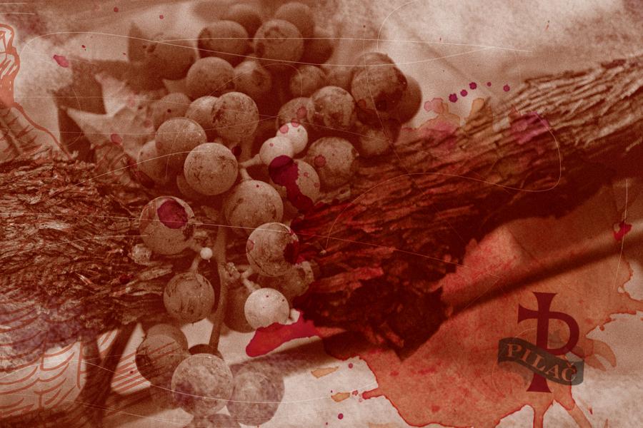 vizualni identitet vinarija pilač sbd